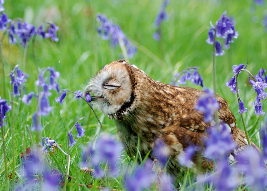 Animal Sniffing Flowers 27