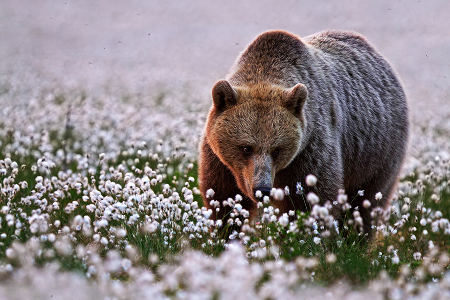 Animal Sniffing Flowers 28