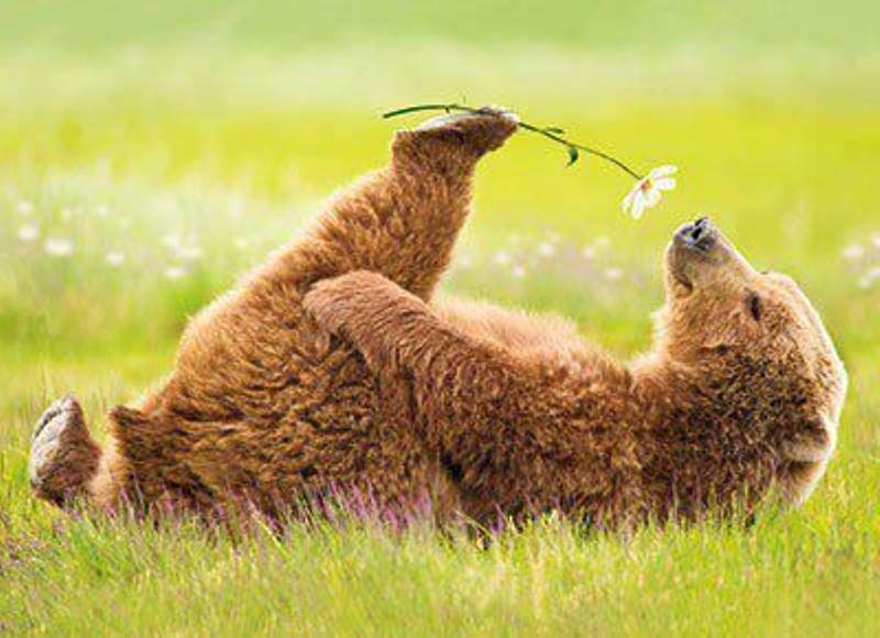 Animal Sniffing Flowers 4
