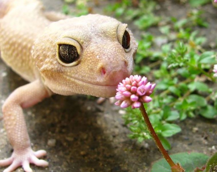Animal Sniffing Flowers 8