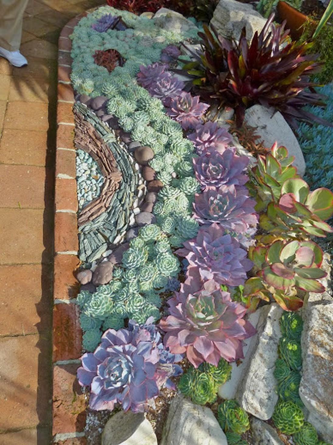 Succulent Garden 10