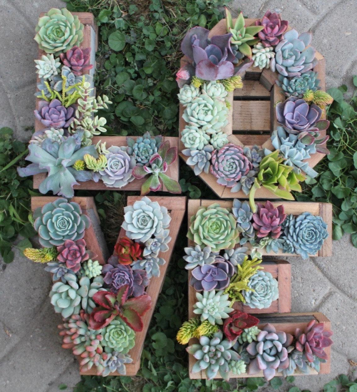 Succulent Garden 11
