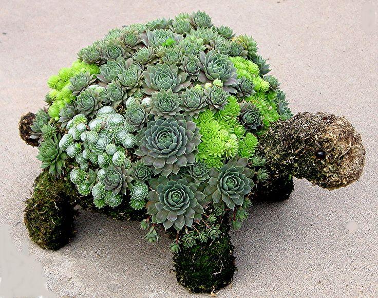 Succulent Garden 12