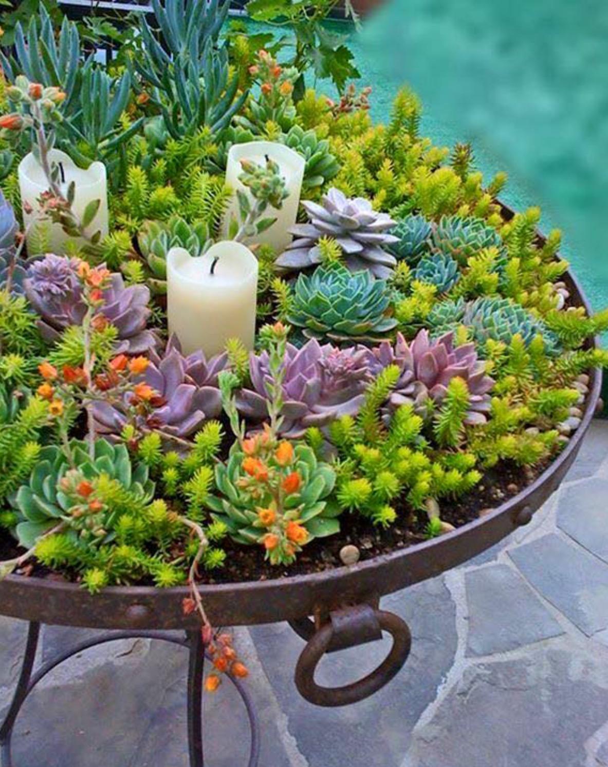 Succulent Garden 16