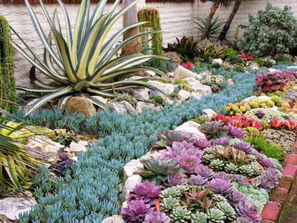 Succulent Garden 17
