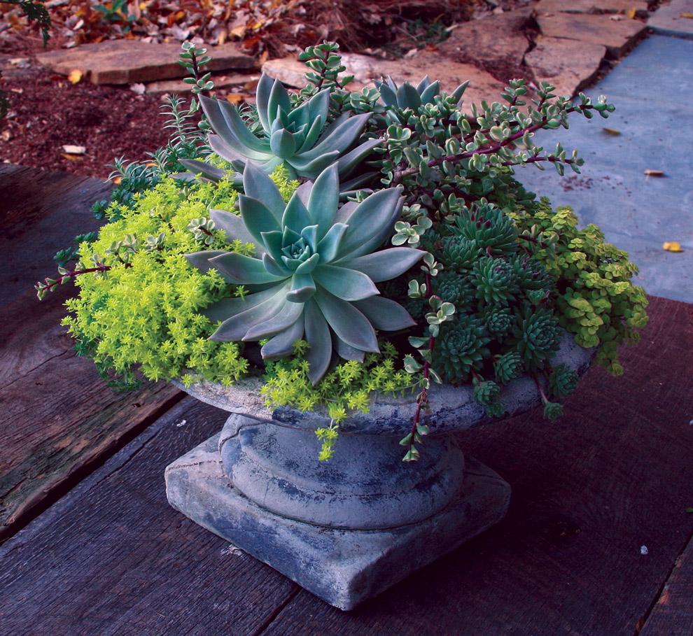 Succulent Garden 18