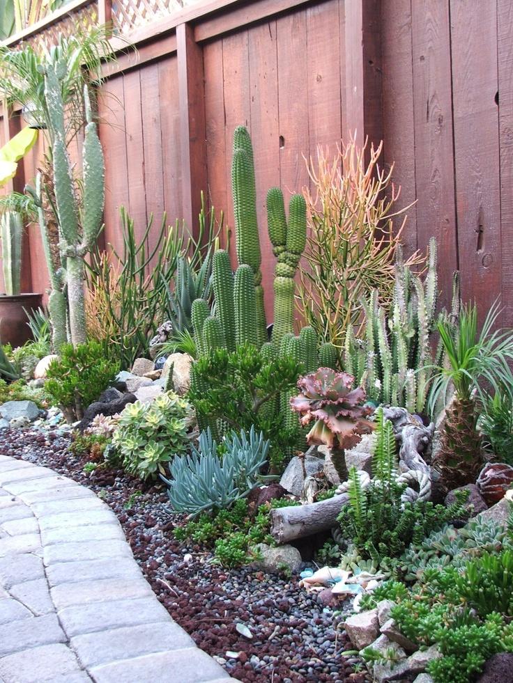 Succulent Garden 19