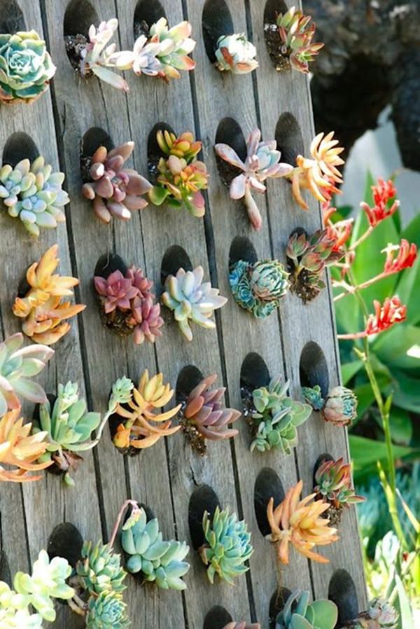 Succulent Garden 20