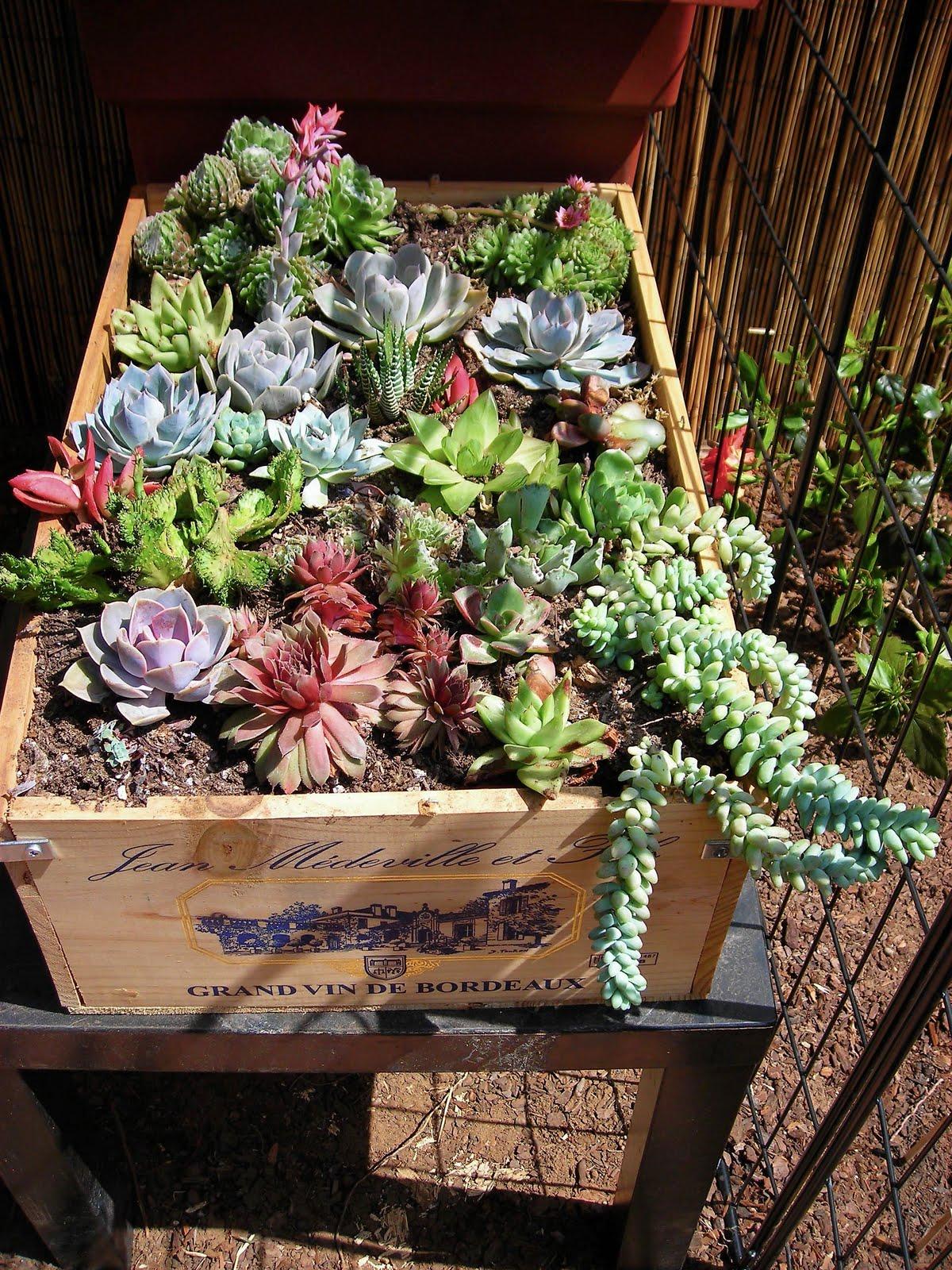 Succulent Garden 21