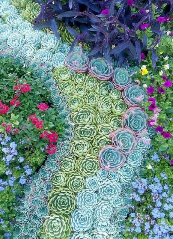 Succulent Garden 8