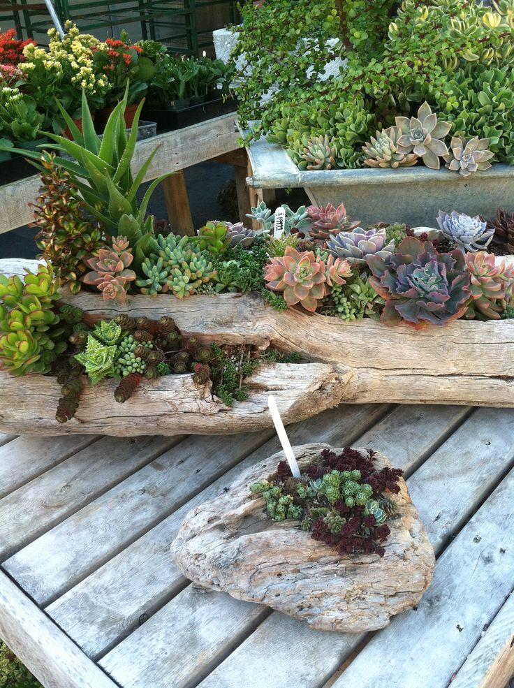 Succulent Garden 9
