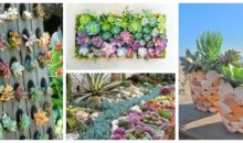 21 Ways You Can Create An Enchanted Succulent Garden In Your Backyard