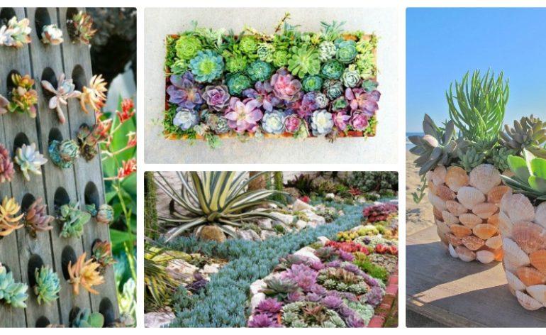 Succulent Garden Feat