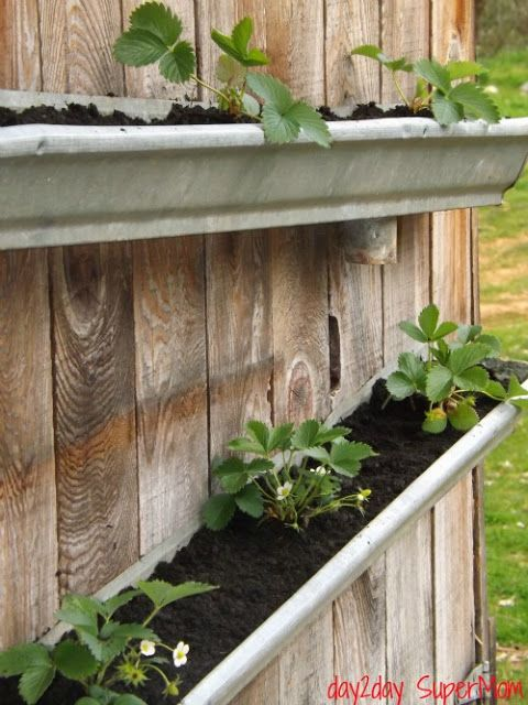 18 Easy Diy Gutter Garden Ideas