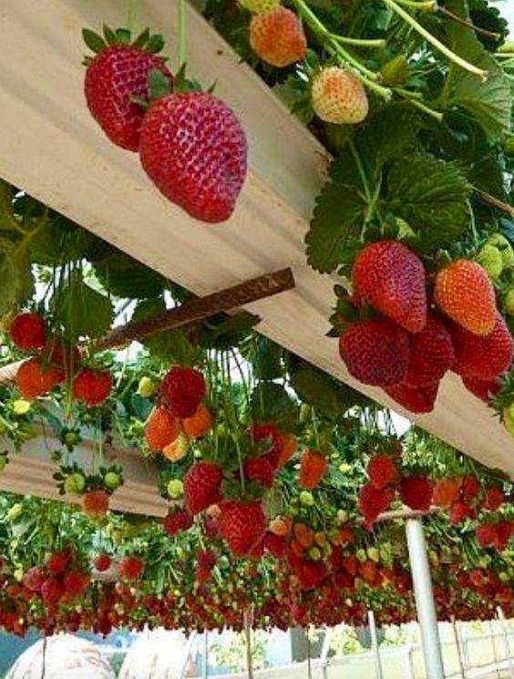 Gutter Garden Ideas 06