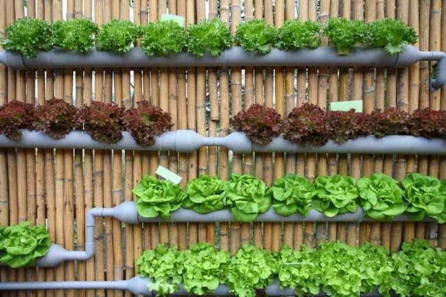 Gutter Garden Ideas 07