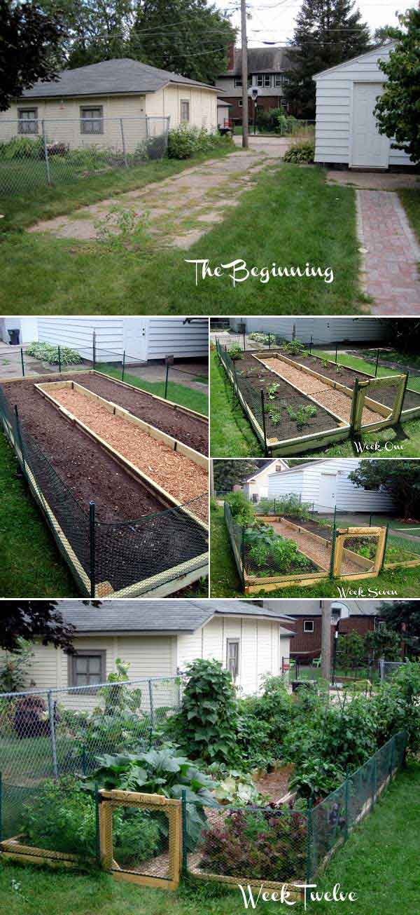 Grow Vegetable Garden 05