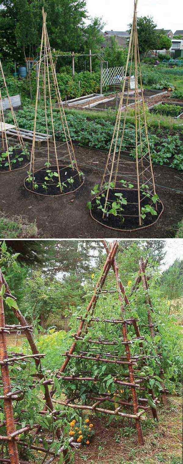 Grow Vegetable Garden 06