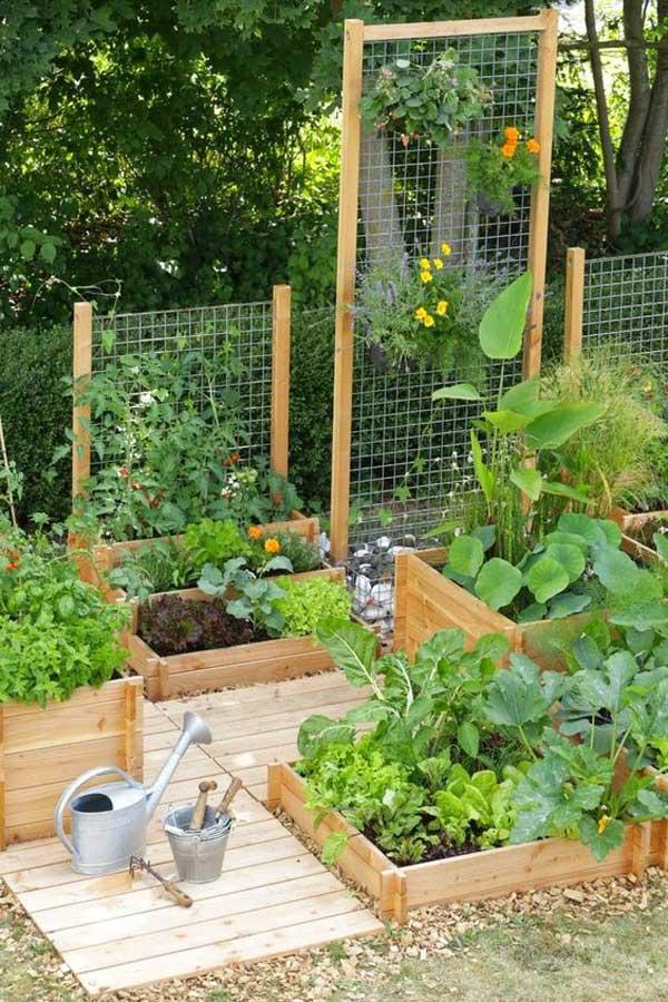 Grow Vegetable Garden 08