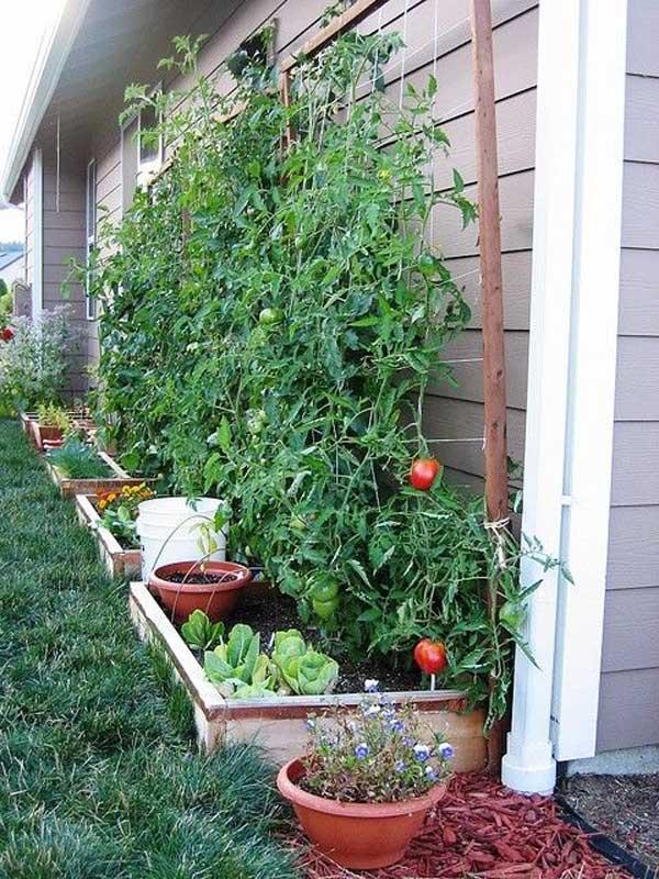 Grow Vegetable Garden 10