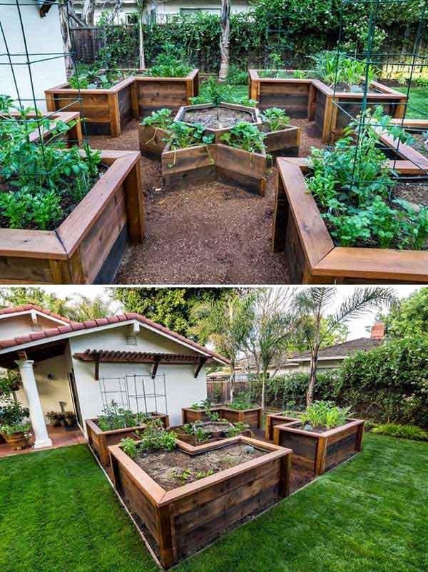 Grow Vegetable Garden 13