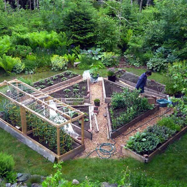 Grow Vegetable Garden 17