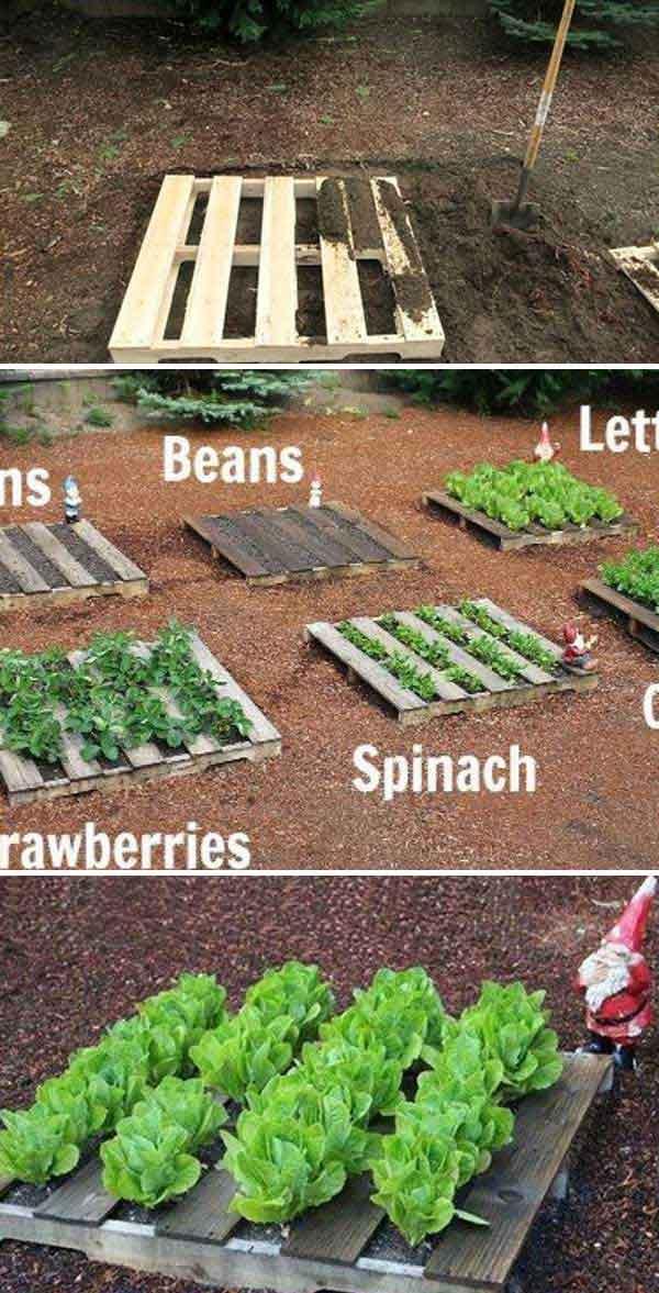 Grow Vegetable Garden 19