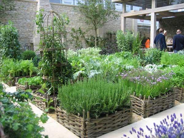 Grow Vegetable Garden 23