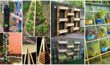 16 Creative Ways to Plant a Vertical Garden