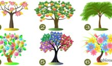 Choose The Tree You Like Most And Discover Your Personality