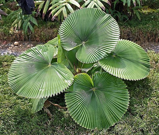 12 Unique Plants You May Never Heard About