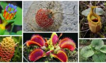 12 Unique Plants You May Never Heard About!