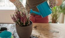 12 Ways You're Killing Your Houseplants