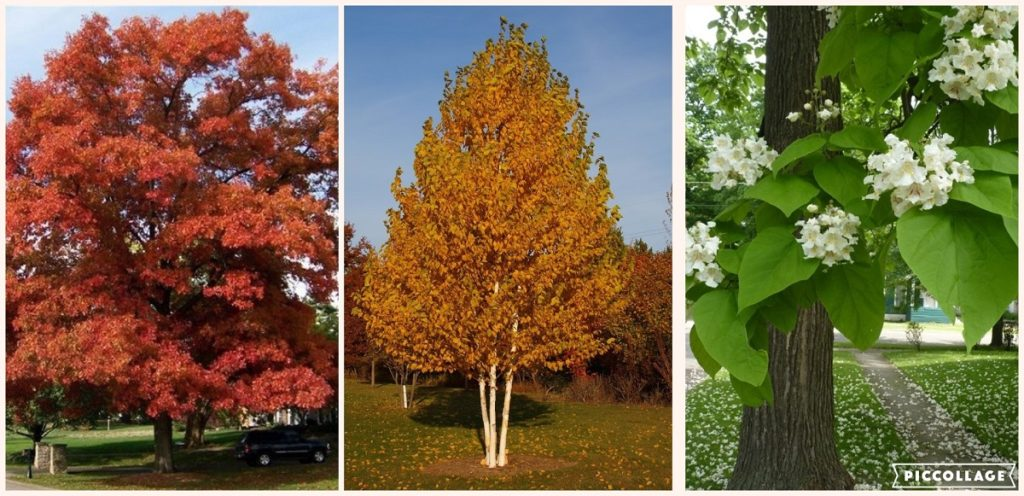 The Top 10 Fastest Growing Trees To Shade Your Home Site