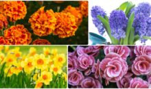 How These 10 Well Known Flowers Got Their Names?