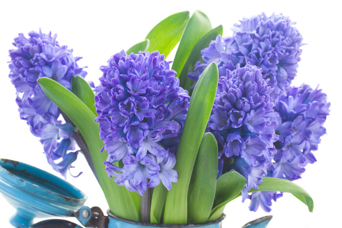 How These 10 Well Known Flowers Got Their Names