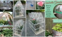 15 Amazing Easy to Create DIY Green House Ideas