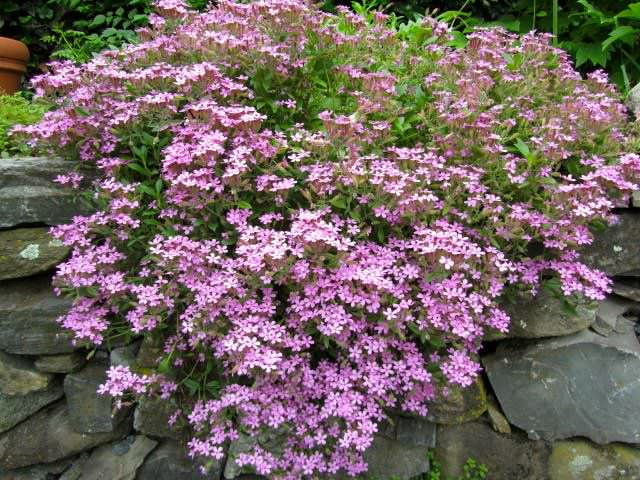 Garden Bush: 24 Plants That Grow (Almost) Without Water