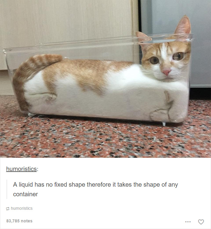 Cat Posts On Tumblr That Are Impossible Not To Laugh At - 16 funniest cat tweets 2016