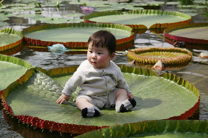 What is The Flower With The Largest Leaves In The World? - photo#32