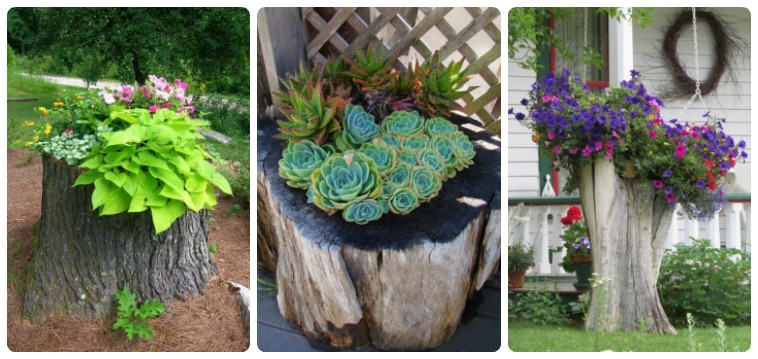 Make Gorgeous Garden Decorations With These 13 Recycling Tree Stumps